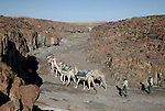 KUNENE, NAMIBIA - APRIL 27: Unidentified rangers travels on a walking safari walks with a camel caravan in Namib Desert close the Sand Dunes at Skeleton Coast on April 27, 2008 in the Kunene, Namibia. The camel caravan walked about 155 miles during a 2-week survey of proposed parkland through the savanna at Etosha National park, through rocky badlands, across the world's oldest desert, the Namib and the blinding dunes and fogy cliffs at Skeleton Coast on the Atlantic Ocean. (Photo by Per-Anders Pettersson).....