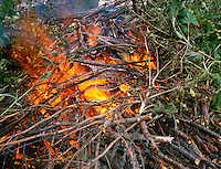 BRUSH FIRE<br /> Burning Wood (W.Corinth, VT)<br /> Flame, a glowing body of mixed  gases, is the result of  the process of combustion, a chemical combination of the fuel substance with oxygen to produce carbon dioxide, carbon monoxide, and water.