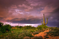 Saguaro Lightning - Arizona - Summer monsoon storms