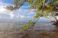 Mangrove branches in the Florida Everglades and the 10,000 islands out of Chokoloskee Island. Photo/Andrew Shurtleff