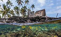 Tropical reef fish swim in the waters surrounding the national historic park Pu'uhonua o Honaunau (or City of Refuge) on the Big Island of Hawai'i.