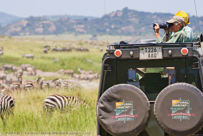 Tourists view and photograph zebras in the Serengeti National Park, Tanzania, East Africa
