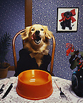 Illustration for feeding your dog well. Tooth paste was the trick to get this one to lick his lips. His owner brought that to my attention in the studio, where I built the set, at the Orange Co. (CA) Register. Jim Mendenhall Photo