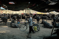 A milkman passes by a buffalo tent at Sonepur fair ground. Bihar, India, Arindam Mukherjee