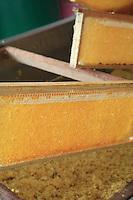 Honey bee harvesting, processing