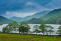 Hawthorn trees in Welsh landscape in Snowdonia National Park at Lake Llyn Gwynant, Gwynedd, Wales