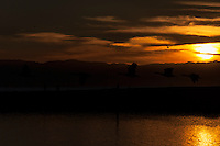 In backlit silhouette, a  skein of Canada geese flies over the water at San Leandro Marina Park at sunset, walkers on the exercise path and the Santa Cruz mountains in the background.