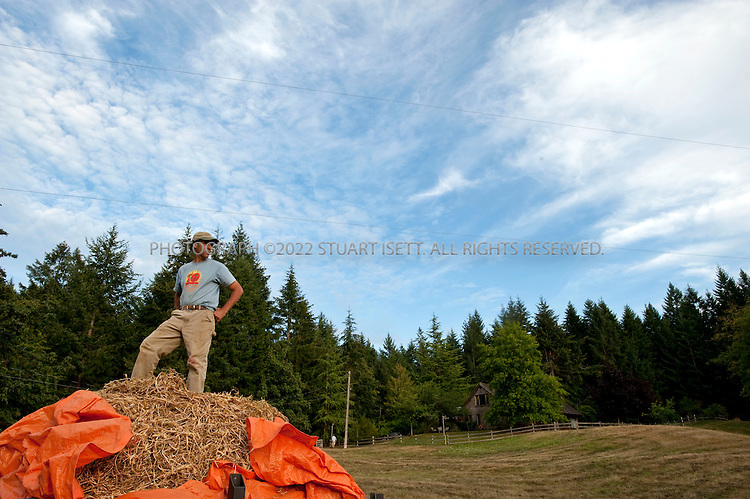 8/24/2008--Salt Spring Island, British Columbia, Canada..Michael Abelman, owner of the Foxglove Farm on Salt Spring Island, stands on peas he just harvest. The produce is grown on Foxglove farm, on Salt Spring Island, one of the Gulf Islands off the coast of Vancouver Island. The farm also offers lodging and cabins...©2009 Stuart Isett. All rights reserved