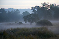 Morning Mist in Kanha National Park, India