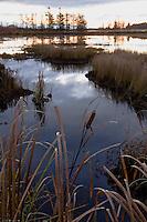A boggy wetlands at dawn near Tahquamenon Falls State Park near Newberry Michigan.