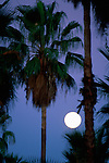 Palm tree with full moon<br />