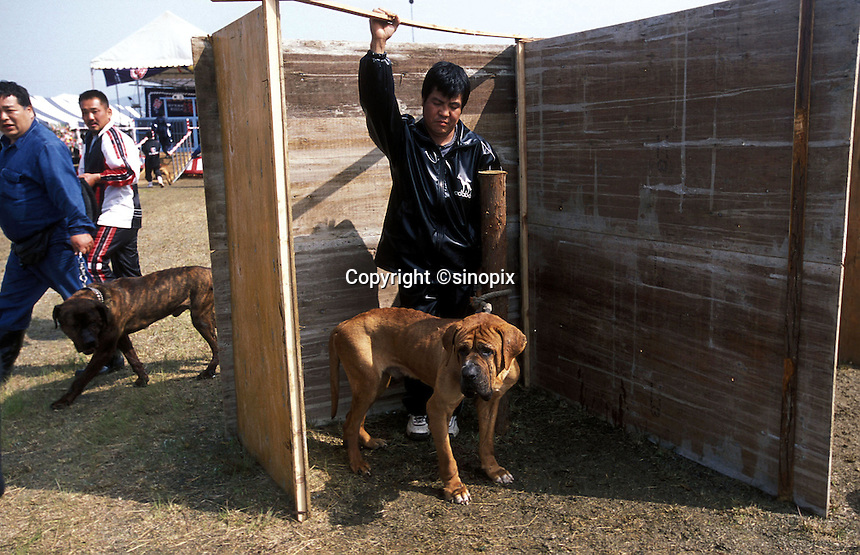 An owner and his dog wait at a specially constructed area prior to the fight in Nagasaki, Japan. The dogs must be calm and silent for at least 15 minutes before a fight or they may be disqualified..