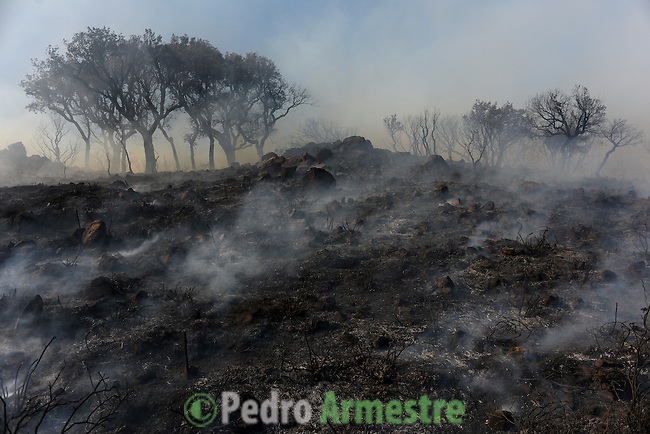 General image a forest fire in Los Barrios, near Cadiz on July 25, 2015. Since July 19 wildfires have ravaged nearly 39,000 hectares of land in Spain, according to the provisional figures from the agriculture ministry. © Pedro ARMESTRE
