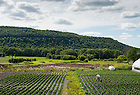 Schoharie Valley Farms in upstate New York is a family-owned fresh-market vegetable operation. In 2010-11, proprietor Richard Ball shifted the bulk of his operations — packinghouse, greenhouses, cold storage and a popular shop and restaurant called The Carrot Barn — to solar energy, which powers it all throughout the day.