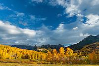 Aspens, Populus Tremula, Cimarron Ridge, Precipice Peak, Uncompahgre National Forest, Colorado