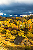 Old barn, autumn colors, Teton Valley Idaho. The Grand Teton is hiding his head in the clouds of the thunderstorm.