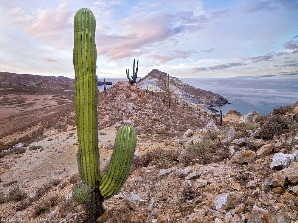 Island Colors, Baja