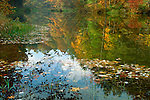 Autumn along the New River