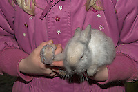 Zwergkaninchen, Zwerg-Kaninchen, wenige Tage altes, noch blindes Junge und sein einige Wochen altes Geschwister auf dem Arm eines Kindes, dwarf rabbit