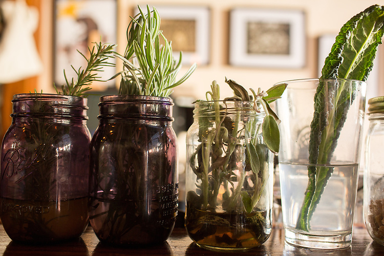 Hillsborough, North Carolina - Thursday January 21, 2016 - Herbs and leaves to be used in drinks adorn the bar in LaPlace in Hillsborough, NC.