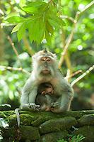 Mother and baby.<br /> Ubud, Bali