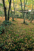 The shrine of Gioji in Arashyiama is especially tranquil in autumn when the mossy floor of the  forest is covered with falling  maple and ginko leaves.