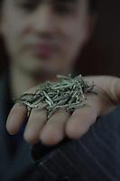 China Silver Tip Tea Farm