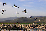 Hula lake in the Upper Galilee