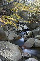 Stream in Nelson County, Va.