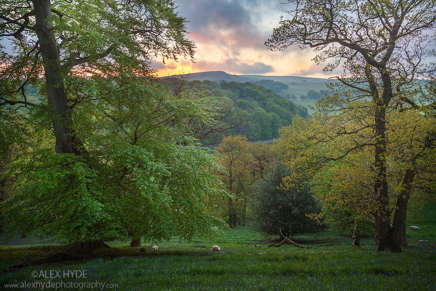 Mixed deciduous woodland in spring, Peak District National Park, Cheshire, UK. May.