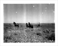 Archive: Polaroid Mustang Roundup