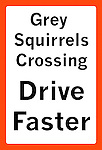 Grey squirrels crossing - drive faster sign
