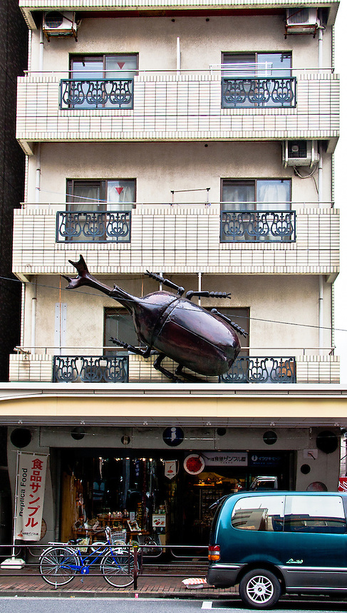 I`ve seen some pretty big bugs in Tokyo - but this ones the biggest.
