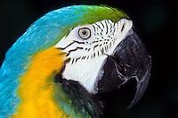 macro shot of parrot head foto, reise, photograph, image, images, photo,<br /> photos, photography, picture, pictures, urlaub, viaje, vacation, imagen, viagi, stock
