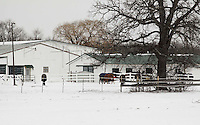 A cold winter's day. Horses grazing in a corral.