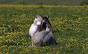 2015_06_11_necking_horses