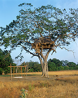 A rickety ladder is the only way up to the tree-house with it spectacular views of the surrounding paddy fields and jungle