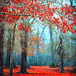 """From the Passionate Earth Series -- nature photos, each with an element of """"red."""""""