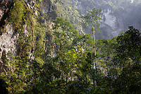 Trees grow tall and skinny as they compete for the sun's rays in the second doline, also called the Garden of Edam, in Hang Son Doong, Vietnam.