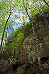 Spring forest and cliff along Saint Mary's River, Saint Mary's Wilderness Area