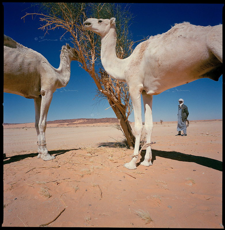 Sahara desert, Chad, December 2004..Every week, a convoy of 40 privately owned Libyan trucks loaded by the WFP with about 1000 metric tons of western food aid cross 2500 km of deep desert across Libya and Chad to reach more than 200 000 refugees from Darfur in camps near the Sudanese border. The end of the desert crossing is near: the convoy meets a nomad family, the first human beings in more than 2 weeks...