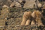 Bundled thatch against stone wall, Bena Village, Bajawa, Flores