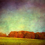 Field and forest in early morning light, impressionistic painterly style photo work