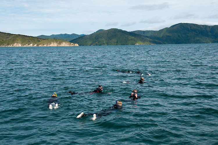 New Zealand, South Island: Dolphins and swimming with dolphins and Dolphin Watch  Ecotour snorkeling in Marlborough Sounds near Picton. Photo copyright Lee Foster. Photo # newzealand125274