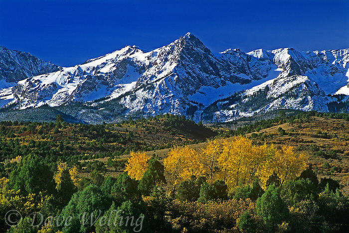 738500003 aspen trees and fir trees below the san juan mountains along the dallas divide in colorado