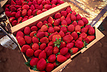 Strawberries, Waimea, Island of Hawaii<br />