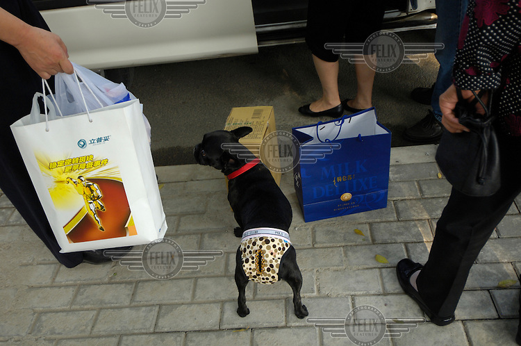 Middle class dog with classy underwear, out shopping with the family. Pets are becoming more and more popular amongst China's middle class.