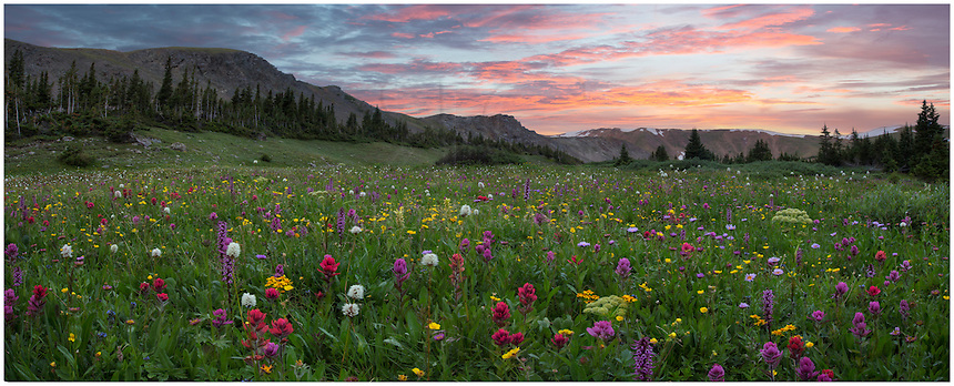 This Colorado wildflower landscape was captured at Butler Gulch. The ridge in the distance is the Continetnal Divide. Colorful wildflowers such as pink elephants, paintbrush, and alpine daisies fill the meadow in late July and August. The trailhead for this location is near Empire along Highway 40 just before the first switchback that leads over Berthoud Pass to Winter Park. The trail itself is straightforward - climbing about 1000 feet in a little over two miles. You can continue pas this point to an old mine if you are so inclined. While I usually make this hike several times each summer, I usually get bogged down at his specific location, taken by the beauty of these wildflowers.