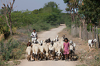 Children herding sheep and goats in farming scene at Nimaj, Rajasthan, Northern India RESERVED USE - NOT FOR DOWNLOAD -  FOR USE CONTACT TIM GRAHAM