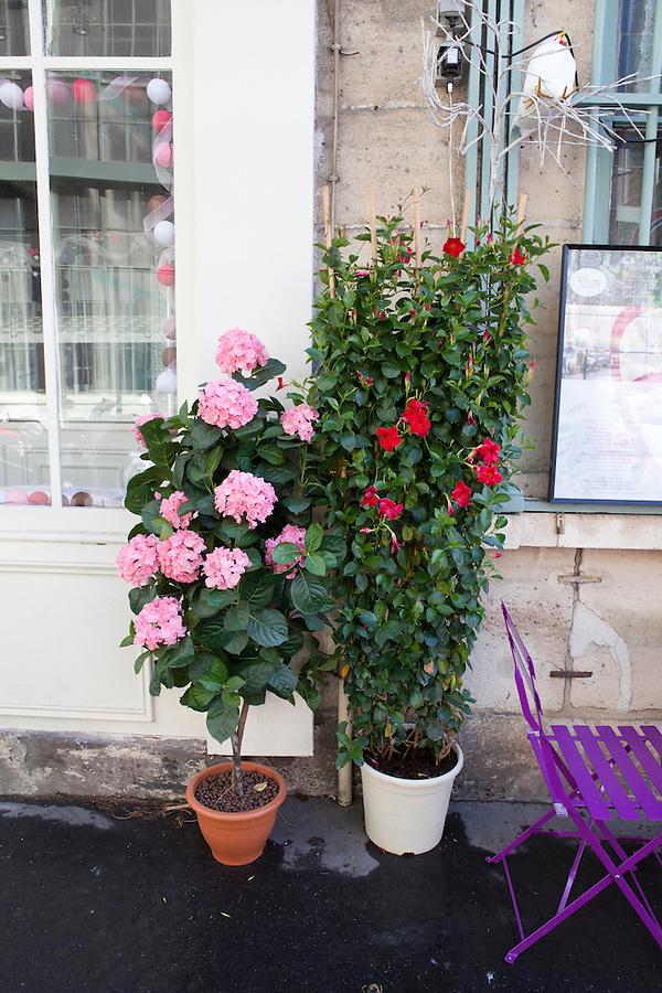 Cafe Au Vieux Paris, Ile-de-la-Cite, Paris, France, Europe